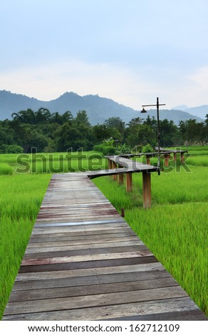 Wooden bridge at the paddy field in Thailand
