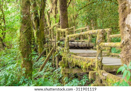 Wooden bridge covered with lush green moss at Doi Inthanon Thailand forest