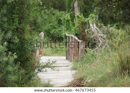 Wooden bridge in nature setting