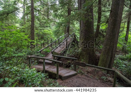 Wooden bridge on a hike to Shi Shi Beach in Neah Bay, Washington, North America.