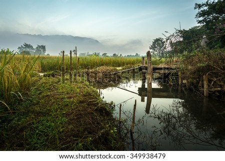 Wooden bridge to the rice field - stock photo