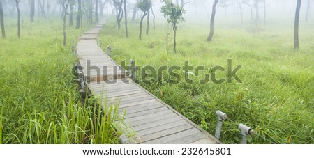 Wooden bridge walkway in mist. Sides of the trees and meadows. - stock photo