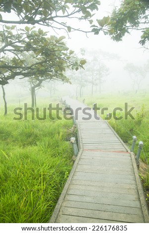 Wooden bridge walkway.Sides of the trees and meadows. - stock photo
