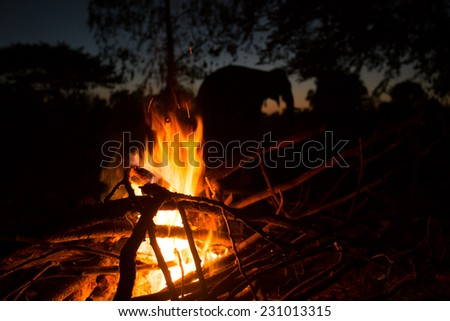 Wooden camp fire near Elephant - stock photo