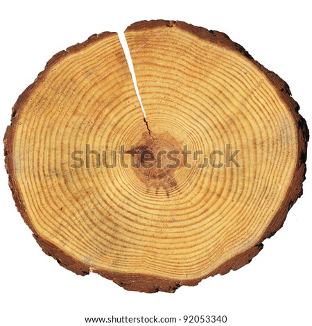 Tree Rings Stock Images Royalty Free Images Amp Vectors