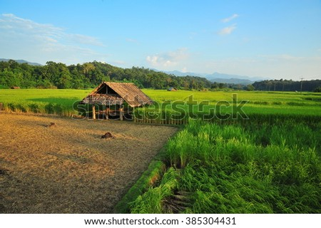 Wooden Cottage and Rice Field in Thailand - stock photo