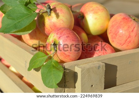 Wooden crate box full of fresh apples (close up) - stock photo