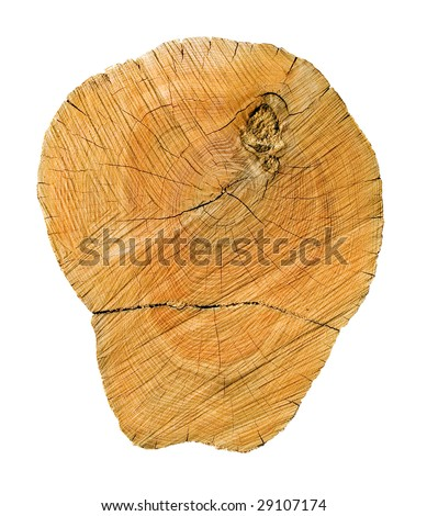 Wooden cut on white background (isolated). - stock photo