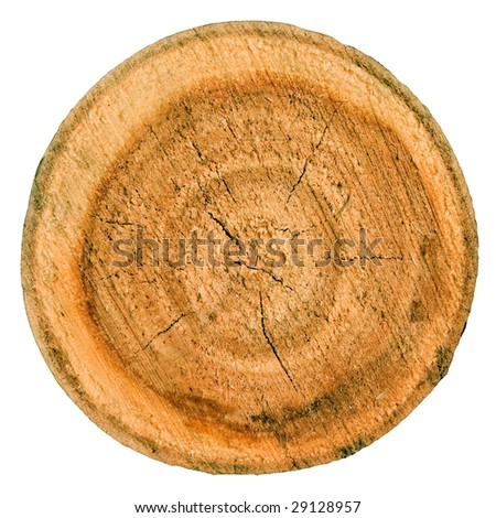 Wooden cut on white background (isolated).
