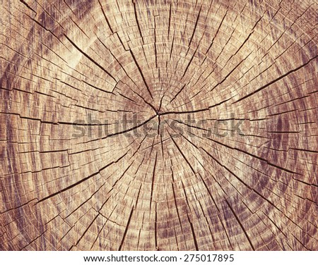 Wooden cut texture, tree rings - stock photo
