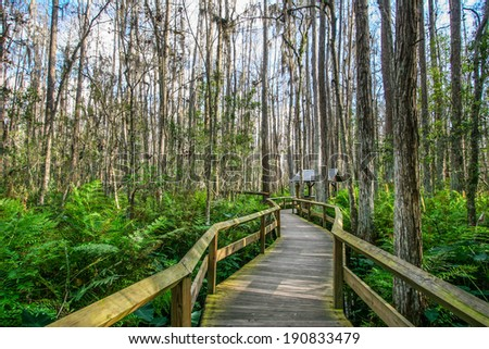 Wooden Deck in the Everglades Swamp, Florida - stock photo
