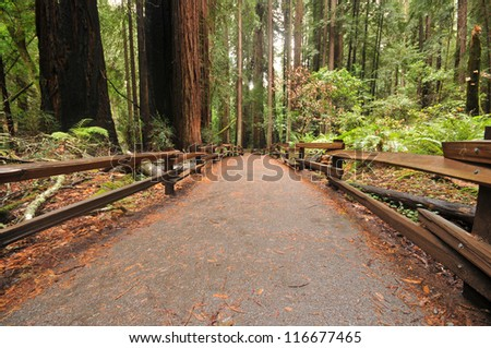 Wooden fence along a forest walkway - stock photo