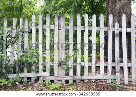 wooden fence and tree