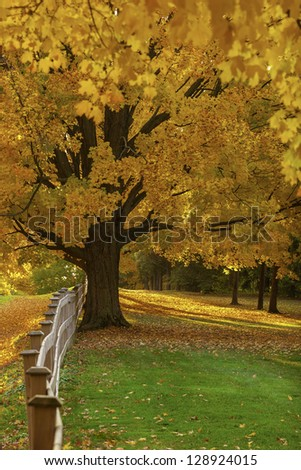 Wooden fence and trrees with colorful autumn leaves. - stock photo