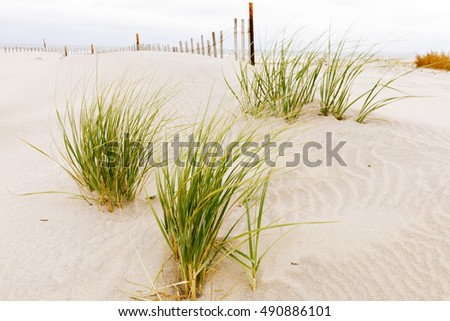 Wooden fence, grass and white sand dunes on the beach.