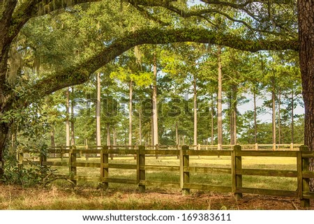 Wooden fence, meadows and tall oak and pine trees in Tallahassee, Florida - stock photo