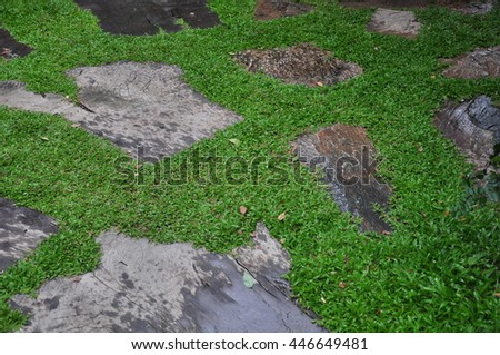 wooden floor background nature design lawn