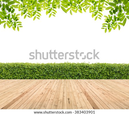 Wooden floor with hedge for background. - stock photo