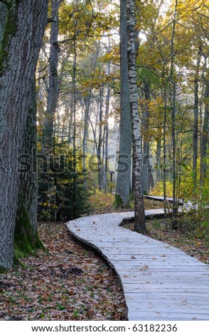 Wooden footpath at oak forest. Sunrise, early morning in a autumn - stock photo