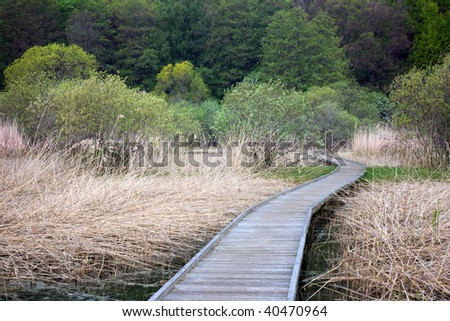 Wooden footpath in a swamp area with reeds trees in the background - stock photo