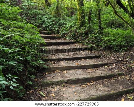 Wooden footpath in deep tropical rain forest, Doi Inthanon national park, Chiangmai, Thailand  - stock photo