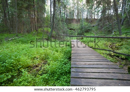 Wooden footpath in the forest