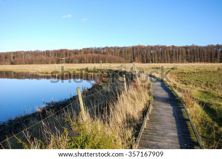 Wooden footpath through a bright wetland at fall - stock photo