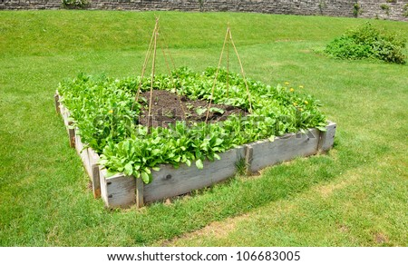 Wooden frames for growing salad and vegetables - stock photo