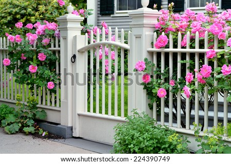 Wooden Gate with Pink Roses - stock photo