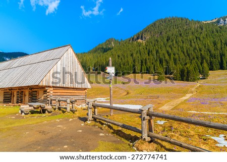 Wooden hut and mountain trail sign on pasture with blooming crocus flowers in Chocholowska valley, Tatra Mountains, Poland - stock photo