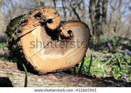 wooden log in spring forest with heart-shaped cut off - stock photo