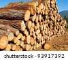 wooden logs - stock photo