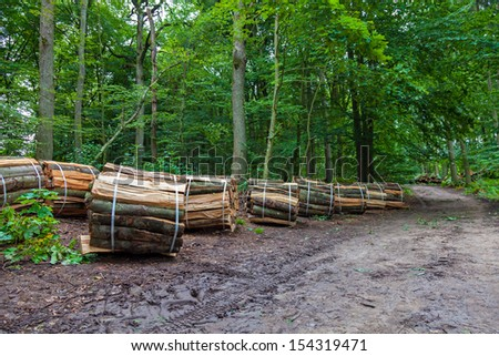 Wooden logs bundled in a forest