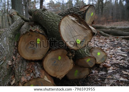 wooden logs in forest