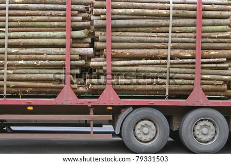 Wooden Logs on Logging Truck Trailer - stock photo