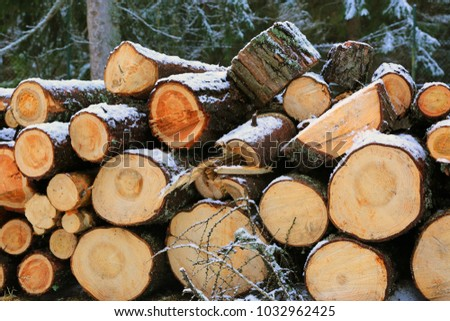 wooden logs store in forest