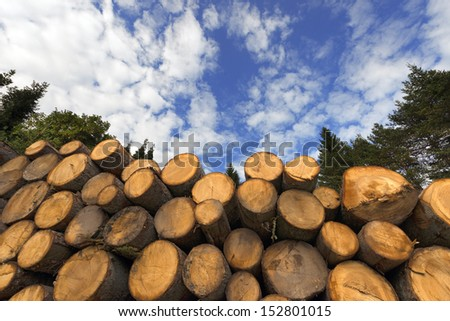 Wooden Logs with Blue Sky on Background / Cut timber in a pile, against a blue sky with clouds and trees - stock photo