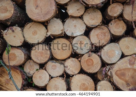 Wooden Logs with Forest after hurricane