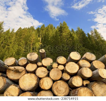 Wooden Logs with Forest on Background. Trunks of trees cut and stacked in the foreground, green forest in the background with blue sky and clouds - stock photo