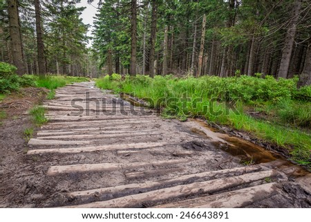 Wooden mountain trail in the forest - stock photo