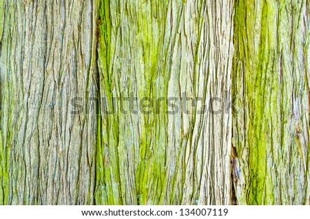Wooden Organic Background Texture - stock photo