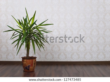 Wooden parquet floor and wallpaper on a wall and houseplant