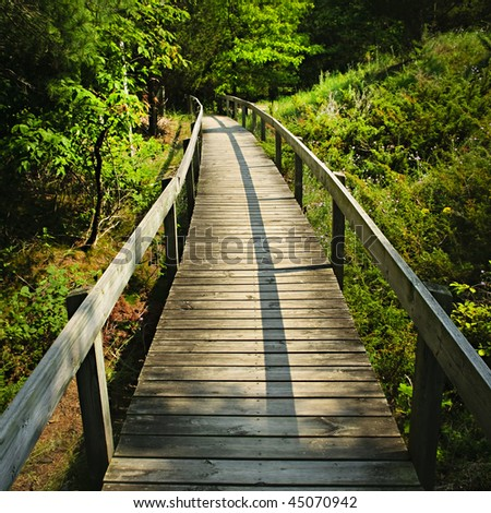 Wooden path through forest. Pinery provincial park, Ontario Canada - stock photo