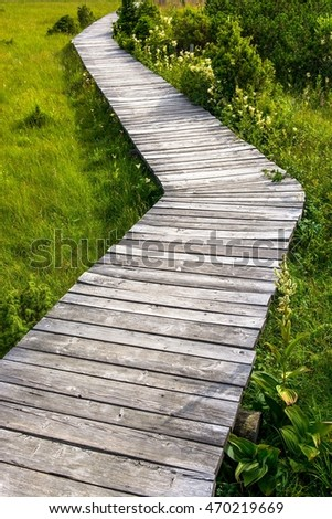 Wooden path, through green meadow