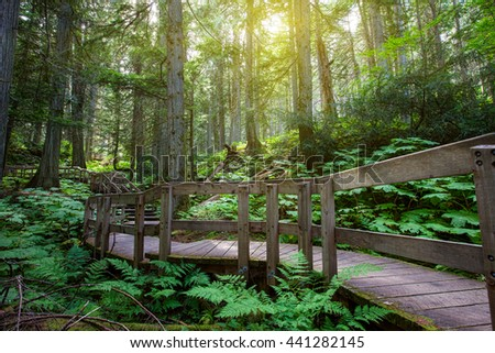 Wooden path through temperate rain forest. Pacific Rim National Park. - stock photo