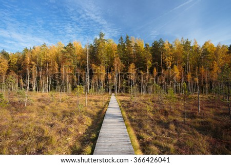 Wooden path way pathway from marsh swamp to forest. Autumn season - stock photo