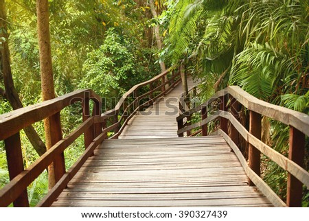 wooden pathway bridge in tropical forest