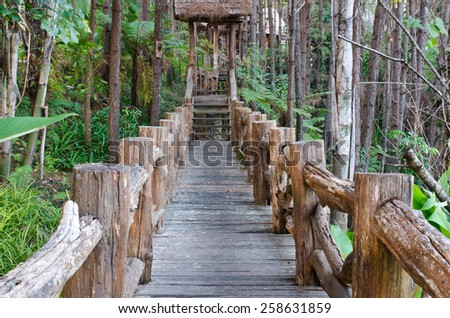 wooden pathway in forest conservative zone