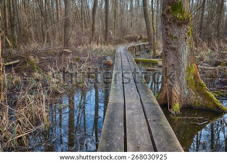 Wooden pathway leading through Weingarten bog, a small nature reserve close to Karlsruhe, Germany, HDR version - stock photo