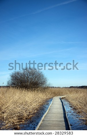 Wooden pathway over a swamp area with reeds - stock photo